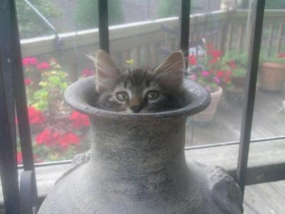 潜む猫07