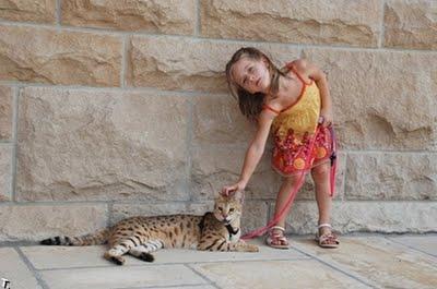 世界一背の高い猫04