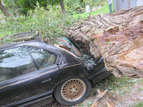 同じ木の枝が倒れた03