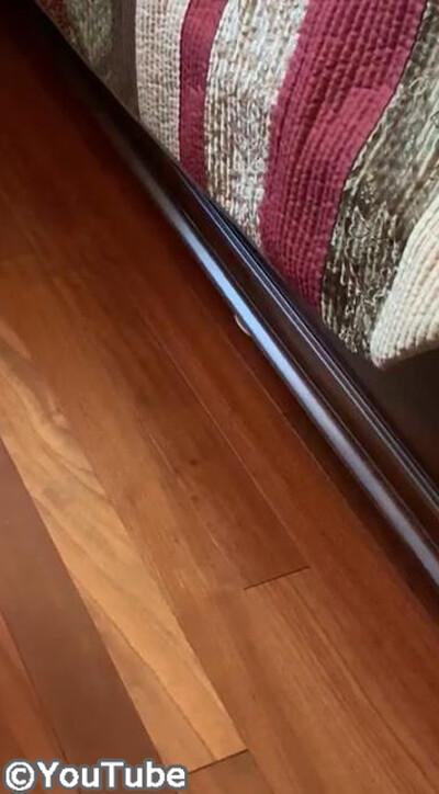 うちの猫は恥ずかしがり屋03