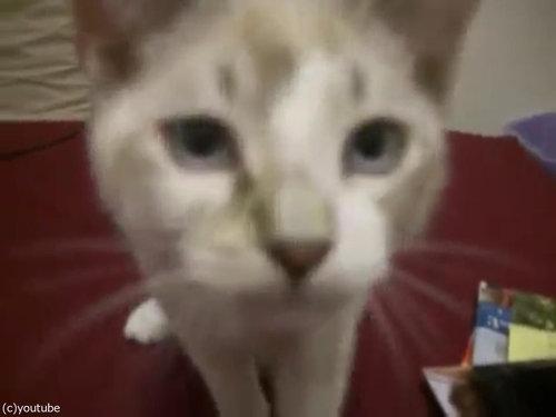 足を組む猫07