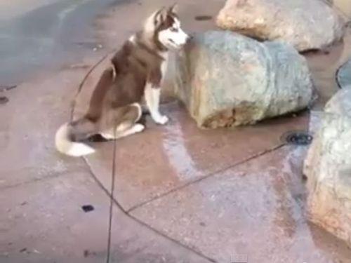 噴水の上に犬が座った01