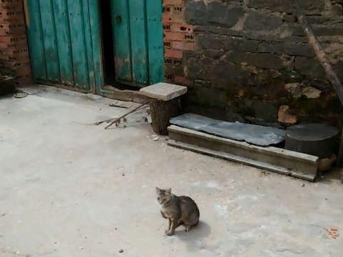 ミッションインポッシブル子猫01
