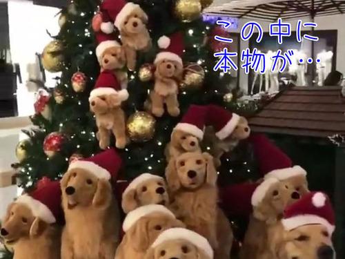 犬「僕もフェイクなの?」00
