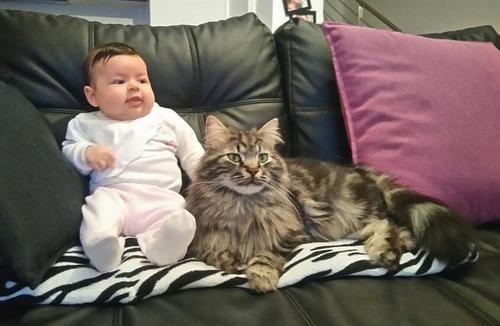 女の子を守る猫05