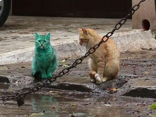 エメラルドグリーン色の猫03