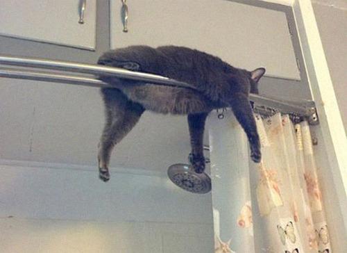 猫はどこでも寝る07