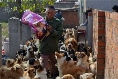 1500匹の犬と200匹の猫03