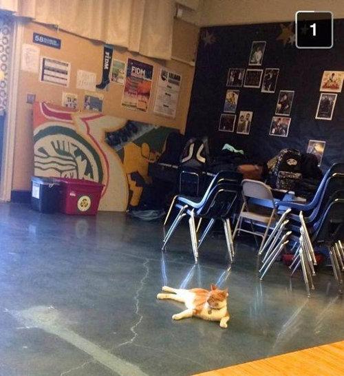 毎日高校に通う猫11