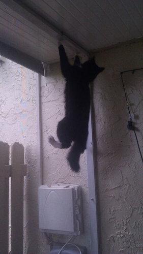 バランス猫18