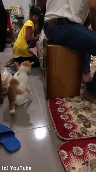 「カホン」に驚きながらも興味津々の猫01