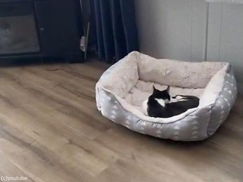犬が小さなベッドで我慢する理由02