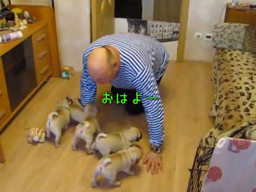 小犬6匹とお父さん00