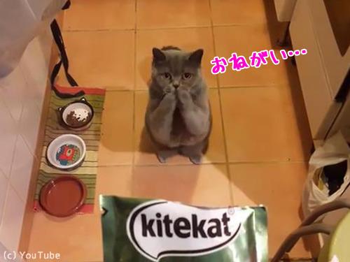 おねだり猫00