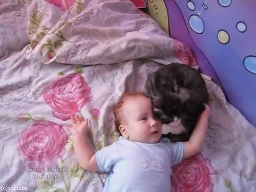 赤ちゃんをあやす猫03