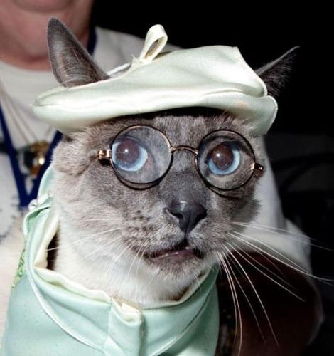 メガネ猫14