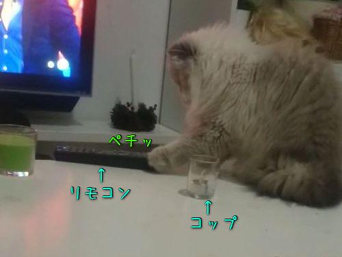 典型的な猫の悪い行動00
