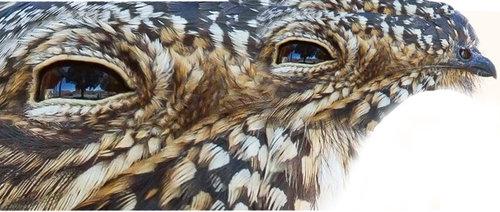 鳥に見えるクチバシ08
