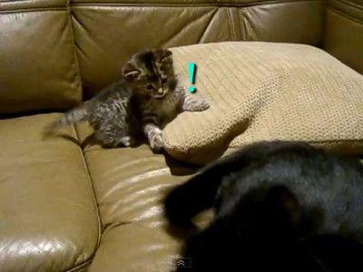 シッポと戦う猫