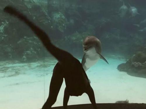 イルカを楽しませる女性01
