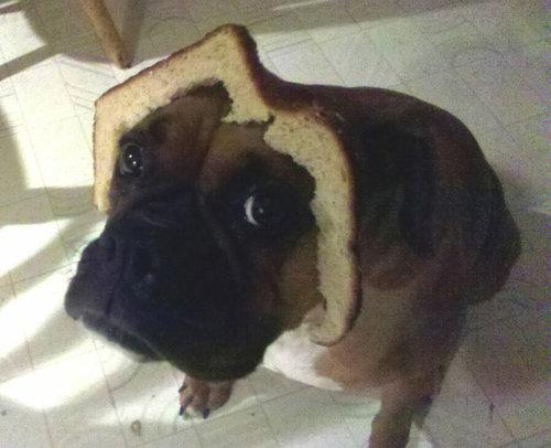 犬とパンの耳03