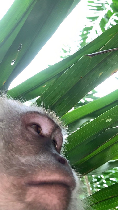 サルがスマホを盗んで自撮り01