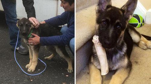 拾われた犬のビフォー&アフター11