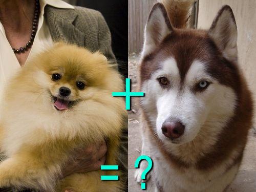 犬の混血A 12