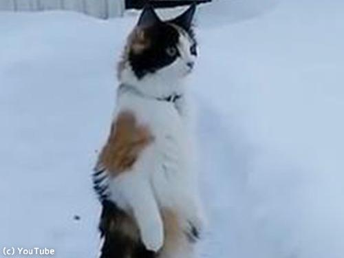 雪景色を見たうちの猫は00