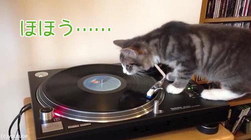 猫にレコードプレイヤーを与えてみたら00
