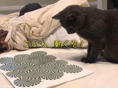 猫に錯視を見せると00