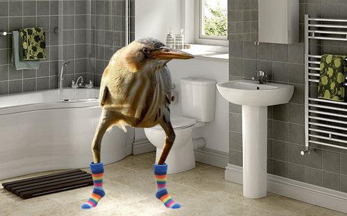 変なルックスの鳥10