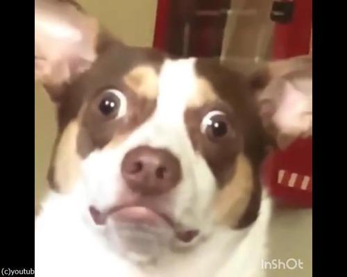 飼い主にキスされた愛犬の顔が02