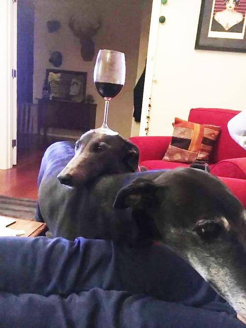 犬「僕はもしかしてワインテーブルかも」01