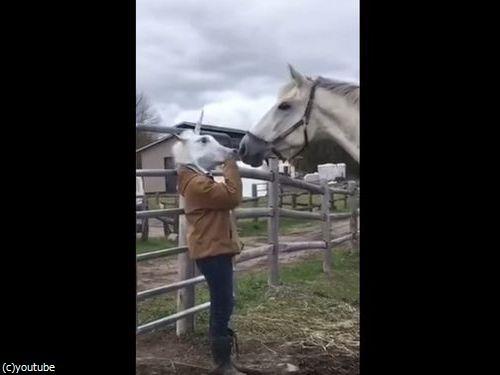 馬のマスクをとったときの馬のリアクション02