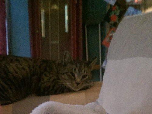 妊娠中に拾った猫が、今は赤ちゃんと親友に00