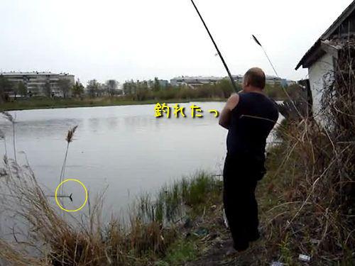 魚を釣ったら猫が!