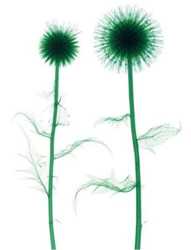 花のレントゲン09