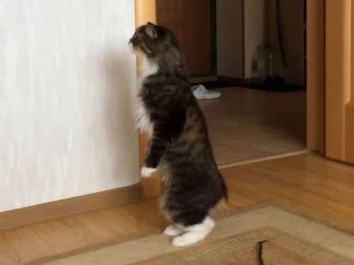 自分が猫であることを忘れる01