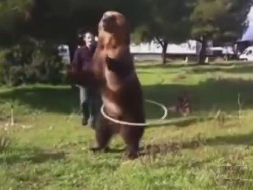 動きが人間っぽいクマ01