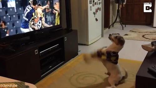 ゴールによろこぶ犬03
