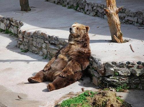 休憩中でリラックス中の動物たち18