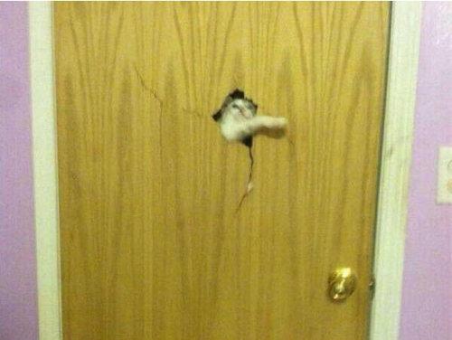 動物「おうちに入れてー!」16
