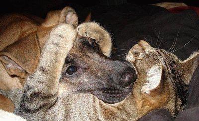 犬の顔を抱っこする猫