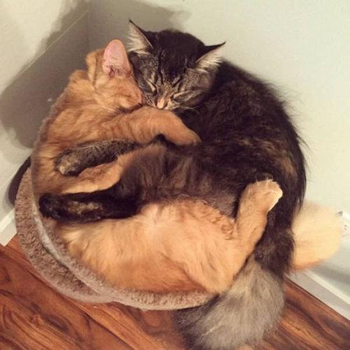 ベッドをシェアしていた子猫2匹03