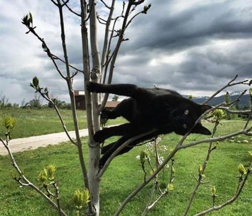 重力を無視する猫05