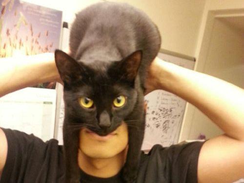 猫でバットマン00