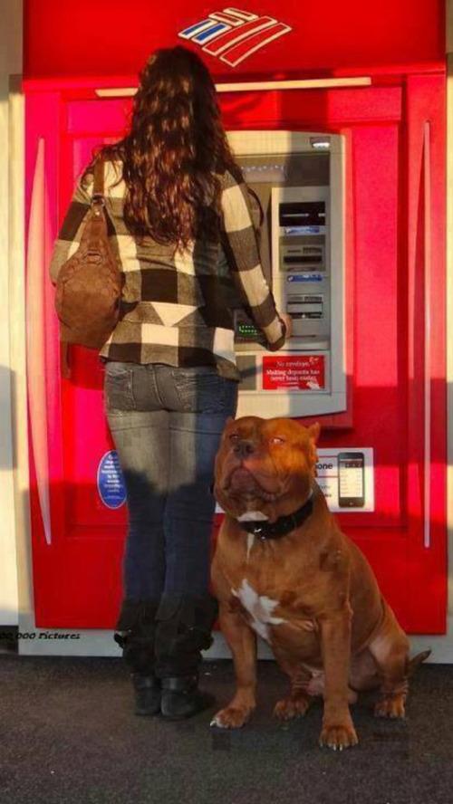 海外のATMと犬04