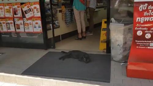 タイの野良猫の涼み方02