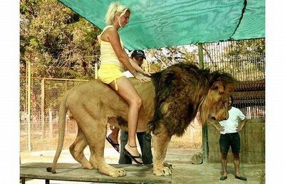 動物ライダー11